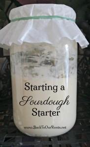 Sourdough Starter