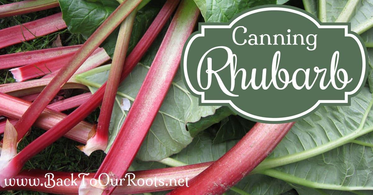 Pressure Canning Rhubarb at Home