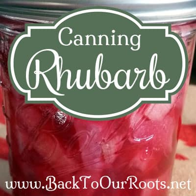 Pressure Canning Rhubarb at Home