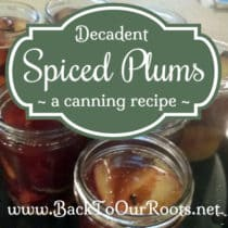Decadent Spiced Plums ~ a Canning Recipe