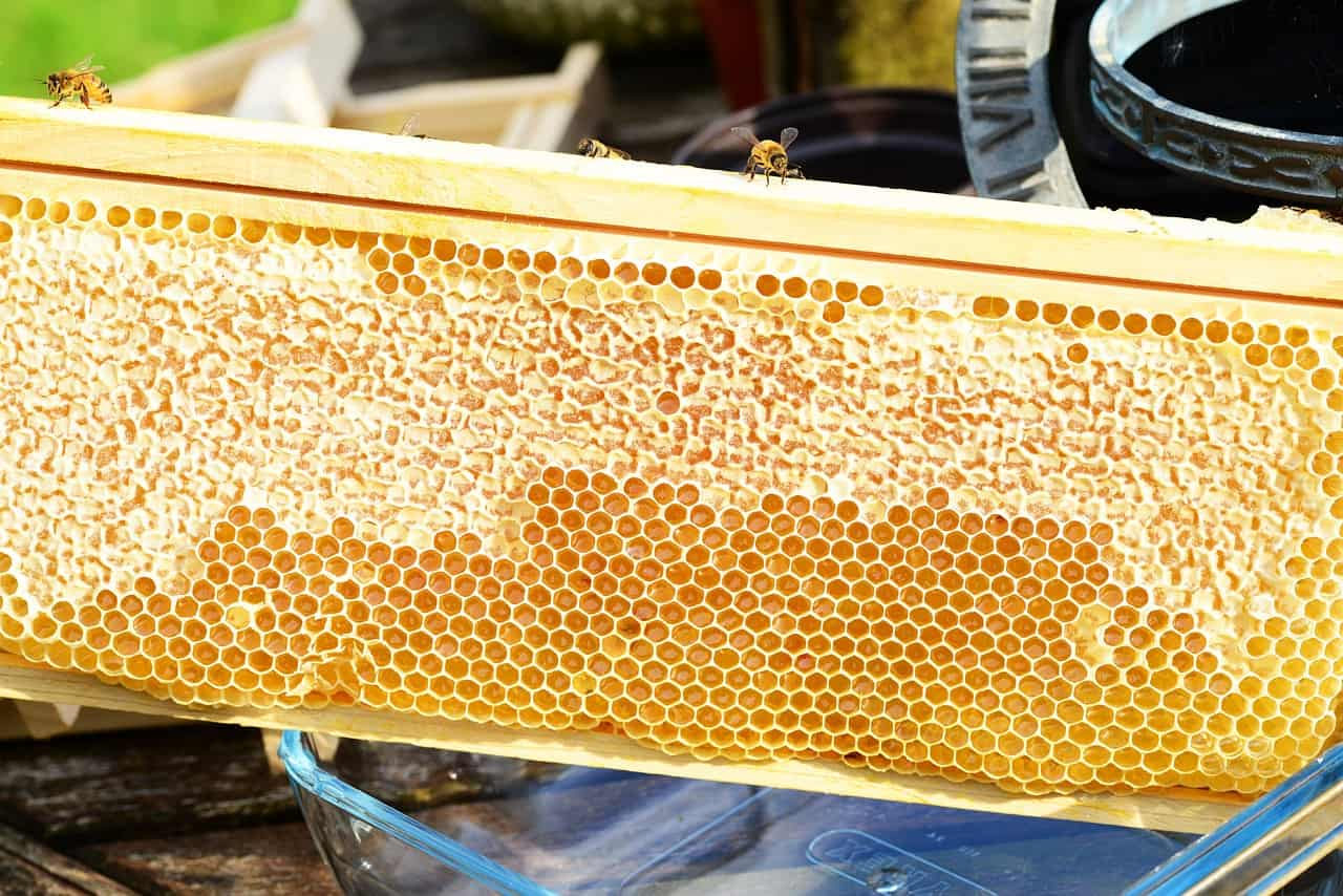 raw local honey is an excellent alternative to sugar