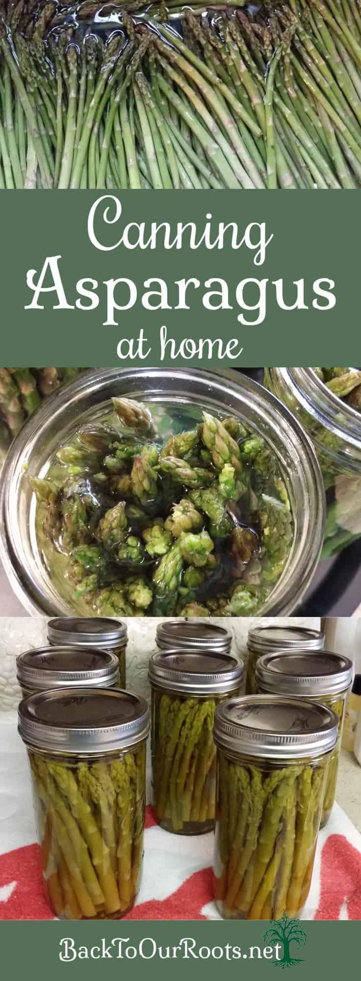 Canning Asparagus How to Can Asparagus