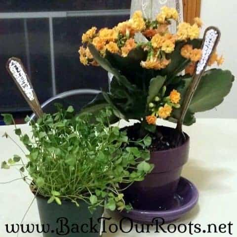 How To Make Pretty Vintage Look~Fork Plant Markers