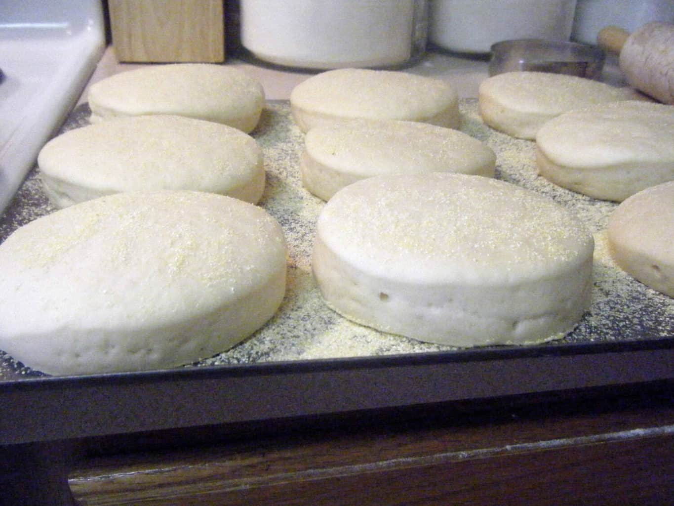 Sourdough English Muffins second rise
