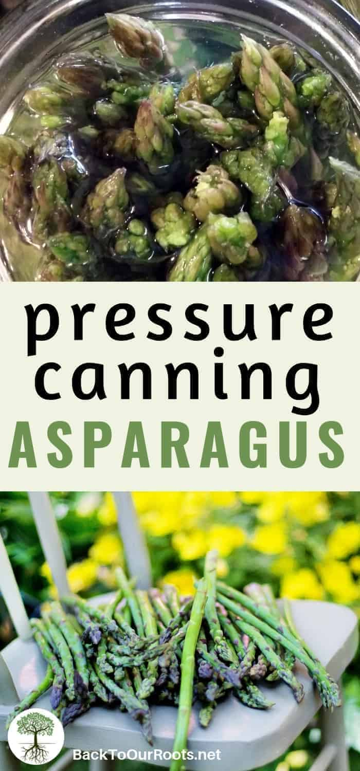 CANNING ASPARAGUS: Asparagus is one of the easiest things to can. I'll guide you step by step through the process so you can add these to your food storage.