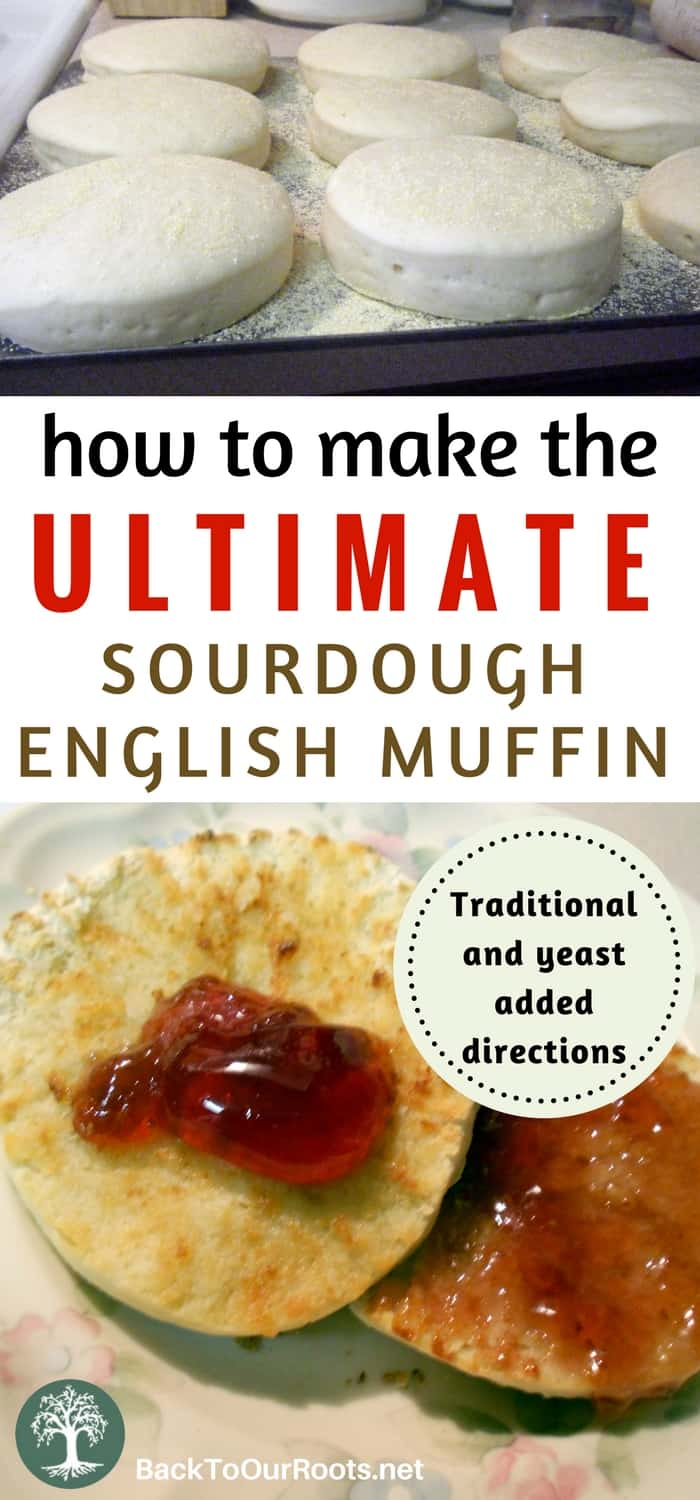 How to Make the Ultimate Sourdough English Muffins