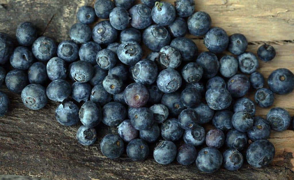 Canning Blueberries ~ Amazing Blueberry Goodness in a Jar