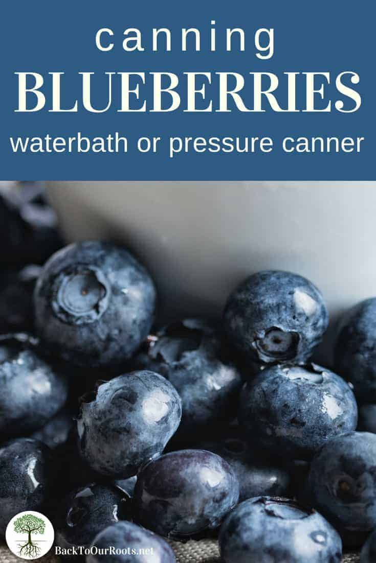 HOW TO CAN BLUEBERRIES: Blueberries are so easy to can for the winter. Process them in syrup or water, and in a pressure canner or waterbath canner.