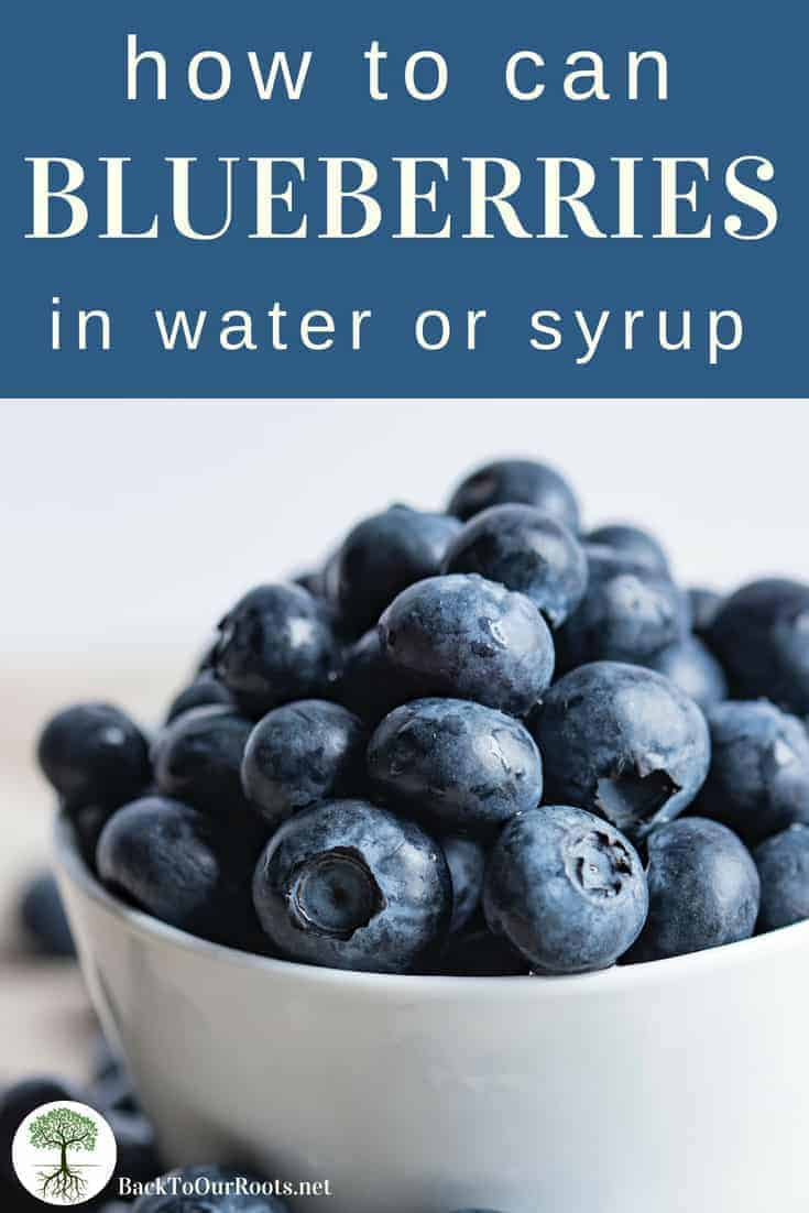 HOW TO CAN BLUEBERRIES: Canning blueberries is so easy! Process them in syrup or water, and in a pressure canner or waterbath canner. I walk you through step-by-step.