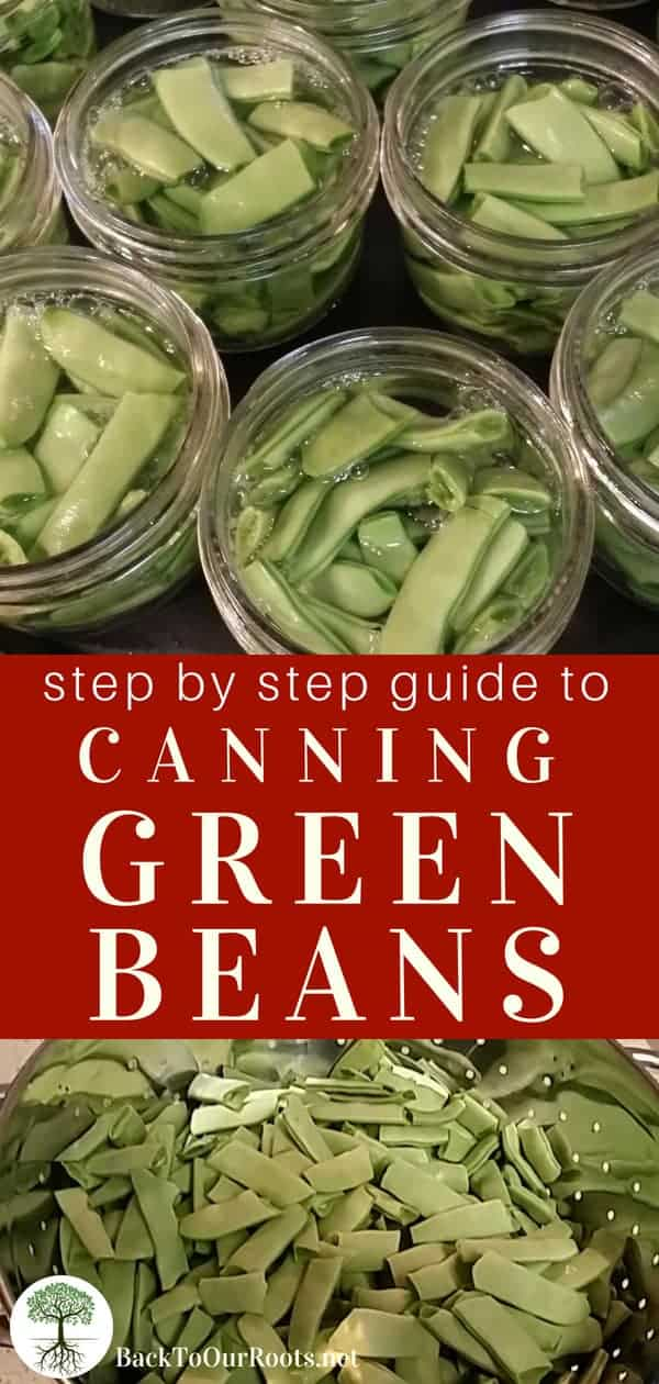 Step by Step Guide to Canning Green Beans