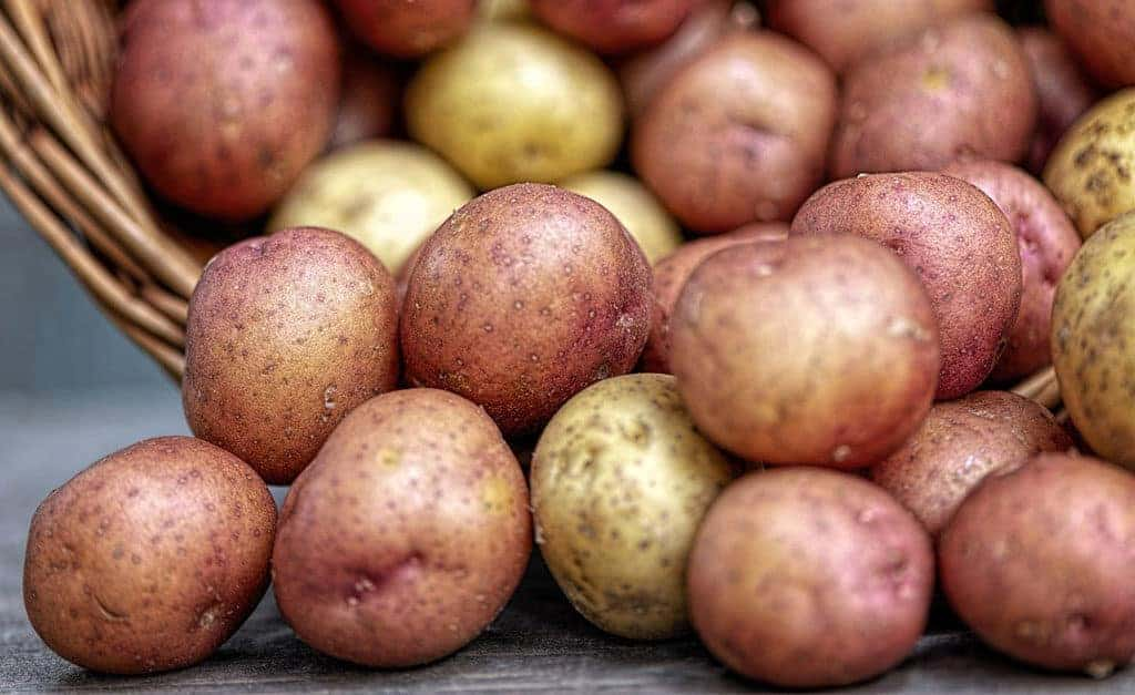 Canning Potatoes in Your Pressure Canner for Food Storage