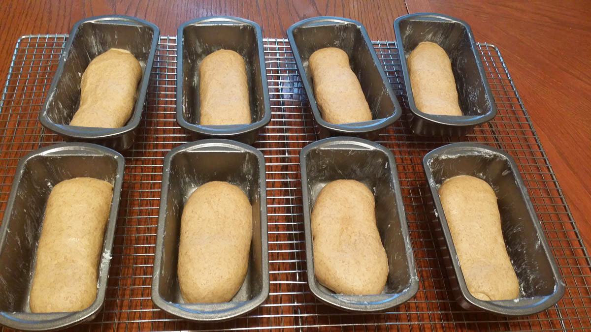 honey whole wheat bread dough loaves in mini bread pans
